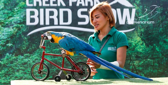 Bird Show at the Dubai Dolphinarium Excluding Transfers