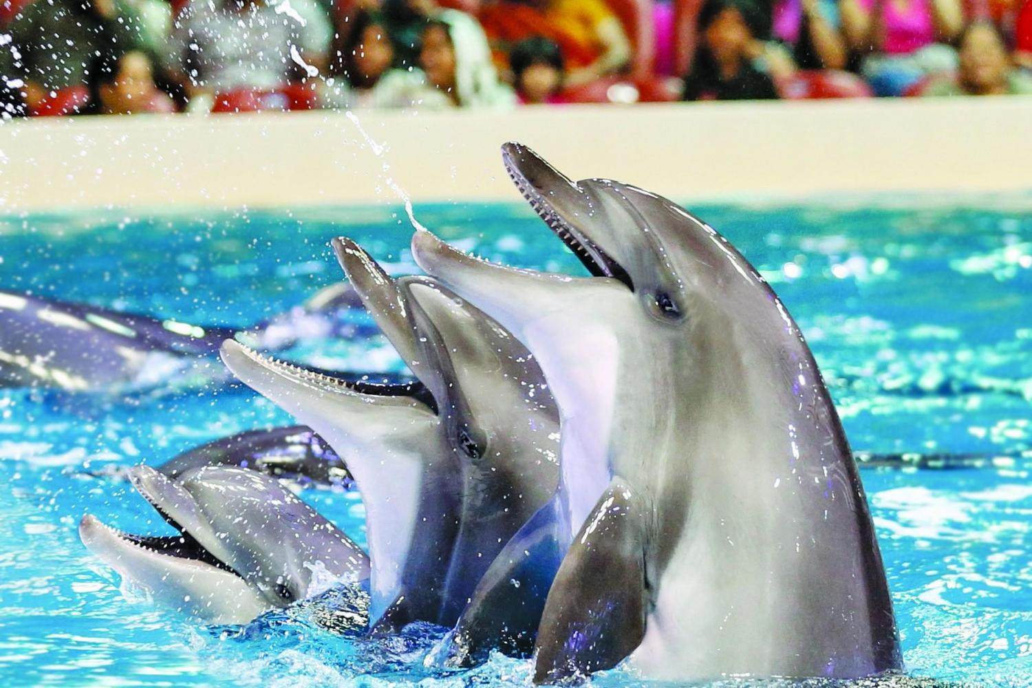 Half Day Dolphinarium Show With Transfer Normal Tickets